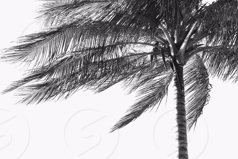 Palmtrees and Sunsets photo