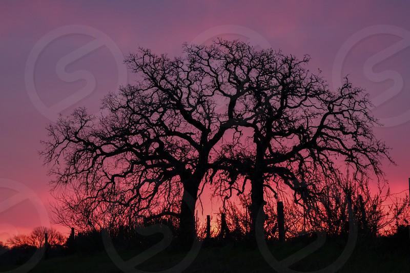 Arborist tree trees sunrise sunset negative color bold  photo