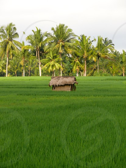 Travel inspiration Bali rice paddy Indonesia photo