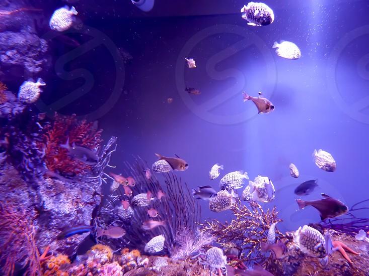 shoal of grey fish near orange reef under water photo