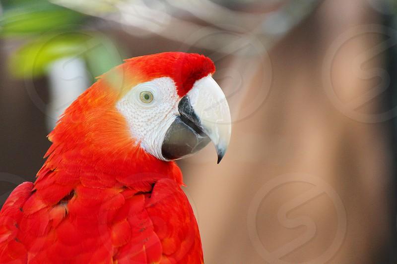 macaw photo