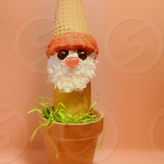 Gnome Twinkie in a flower pot ! photo