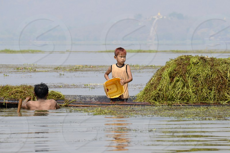 Farmers earn seawead from the Lake Inle near the town of Nyaungshwe at the Inle Lake in the Shan State in the east of Myanmar in Southeastasia. photo