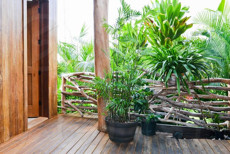 tropical plant greenery vegetation home photo