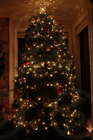 lighted Christmas tree photo