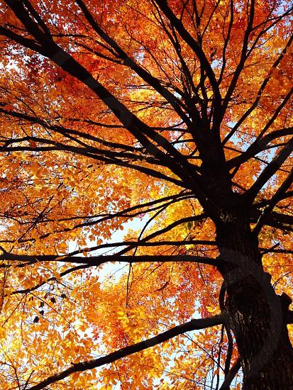 tree fall orange photo