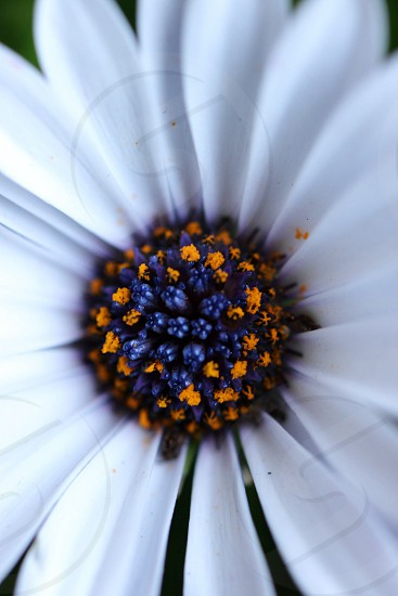 white flower pedals photo
