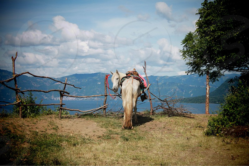 pretty white horses on lake atitlan for a riding adventure in guatemala to the volcanos photo