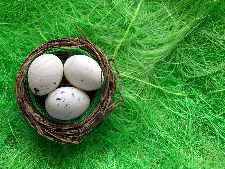 easter eggs nest green grass background decor photo