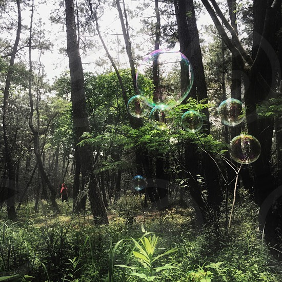bubbles near trees photo