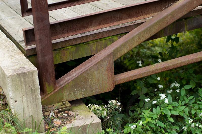 flowers growing by bridge photo