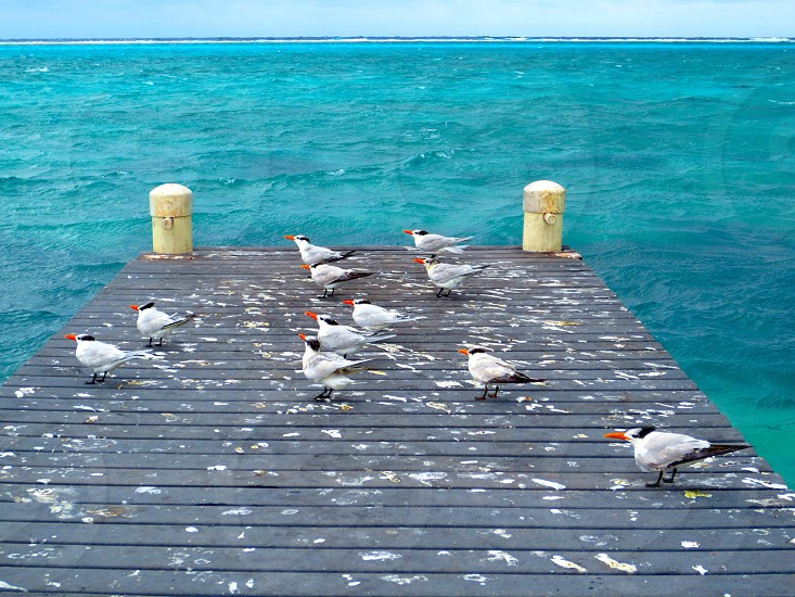 seagulls on ocean pier photo