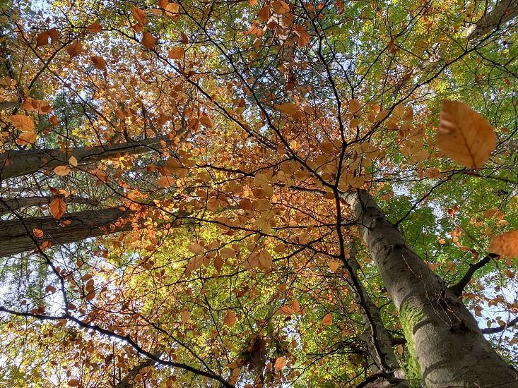 Autumn color forest park views. photo