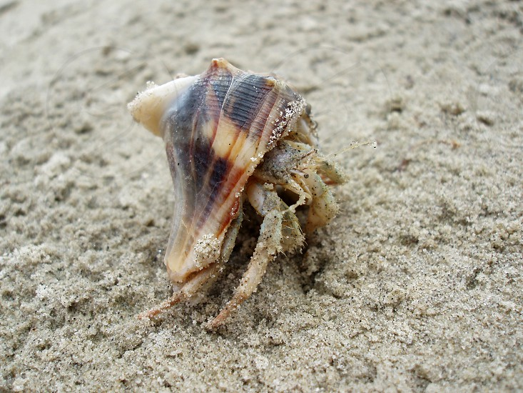hermit crab on the beach photo