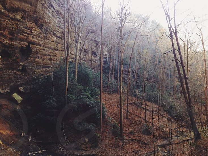 Red River Gorge KY  photo