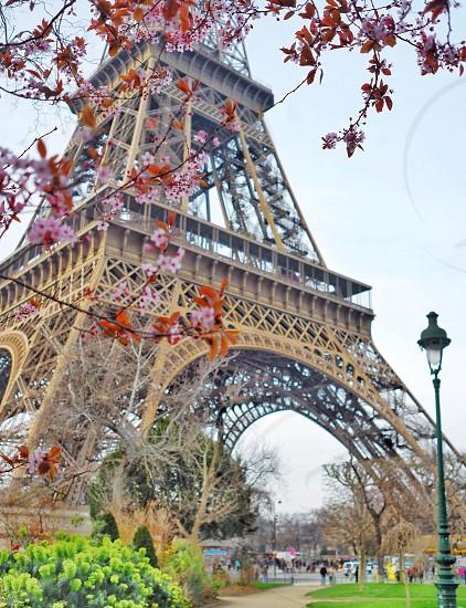 Paris bloom flowers spring photo