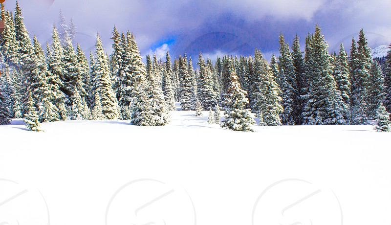 Pristine snow and backcountry skiing photo