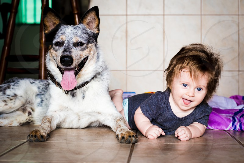 Photo of an Australian Cattle Dog (Blue Heeler) with a baby. photo