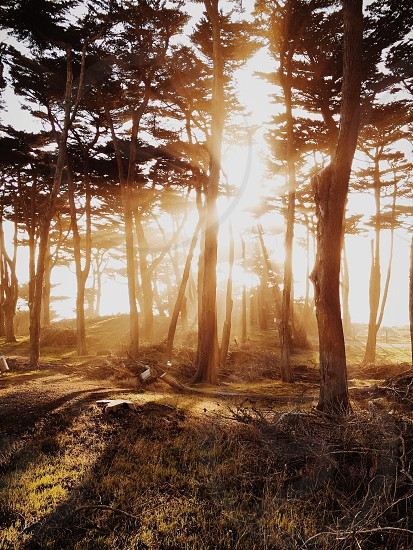Light beams at sunset through Lands End. San Francisco California.  photo