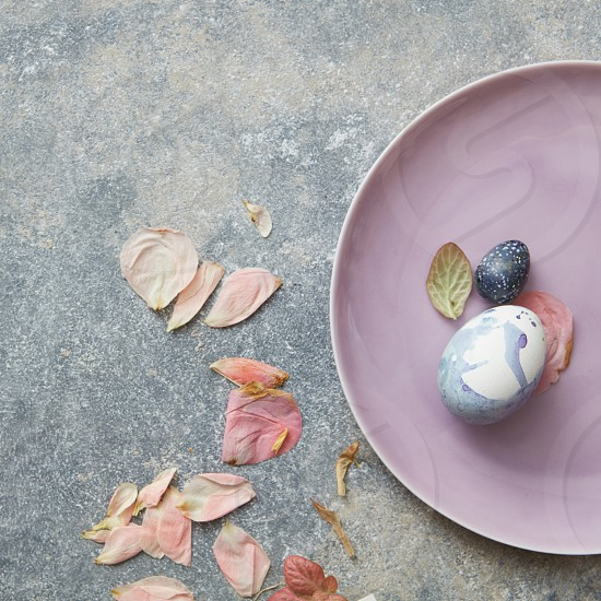 Beautiful Easter galactic eggs on a pink plate with dry rose petals as natural products on a concrete gray background shot from above photo