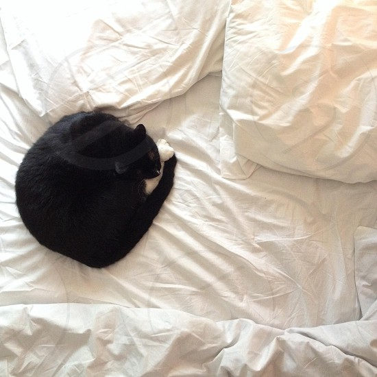 black and white cat on bed photo