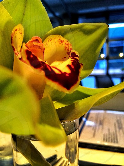 yellow and brown orchid photo