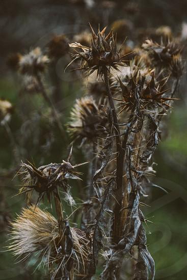 Thorn spikes hurt danger plant photo