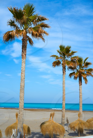 Las Arenas Malvarrosa beach in Valencia palm trees and sunroof photo