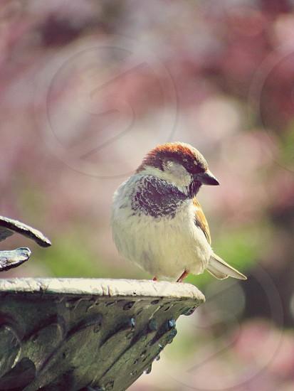 Birds fountain NYC garden spring  photo