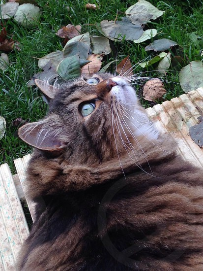 Autumn tabby cat photo