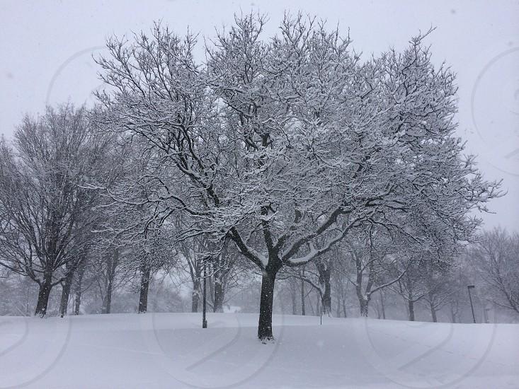 Winter wonderland in Wisconsin  photo