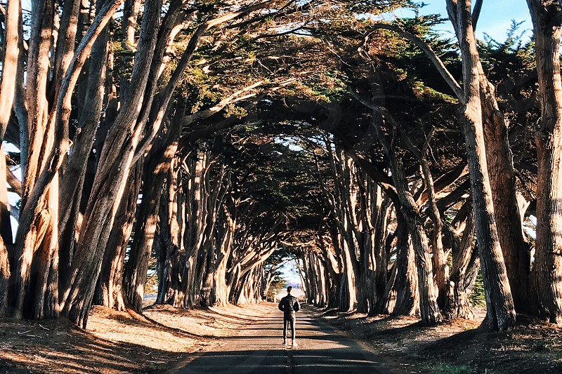 Tree tunnel point Reyes photo