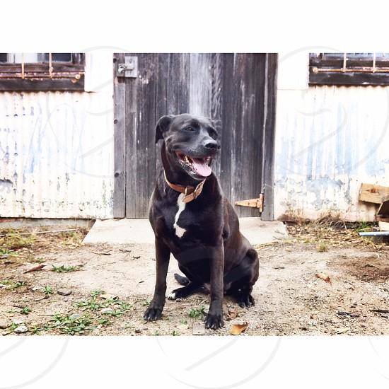 Animal portrait dog photo