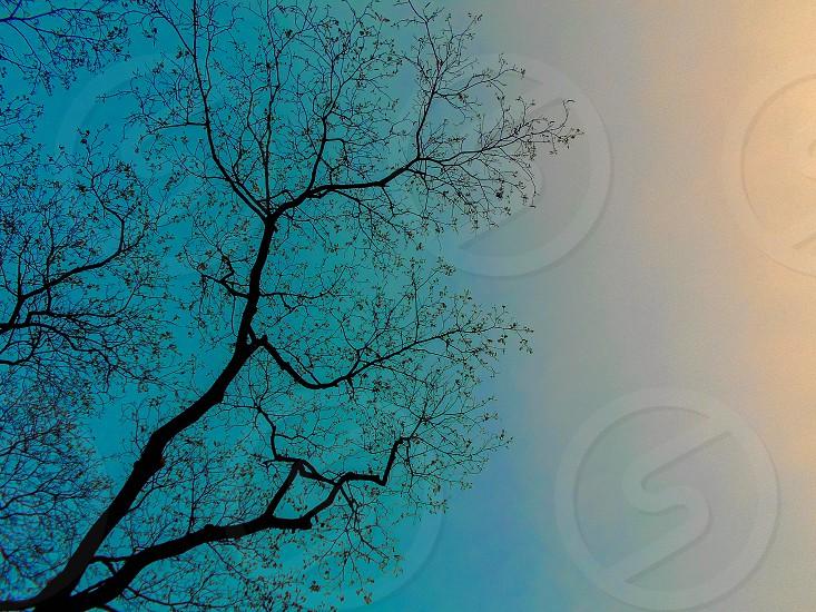 Nature PhotographySky PhotographyColorsPhotography2106 photo