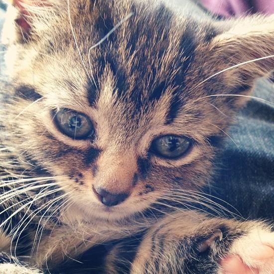 My kitten photo