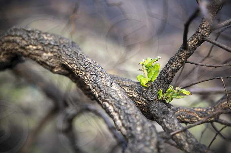 Rebirth of a plant from a burnt-out tree new life is born from a small plant photo