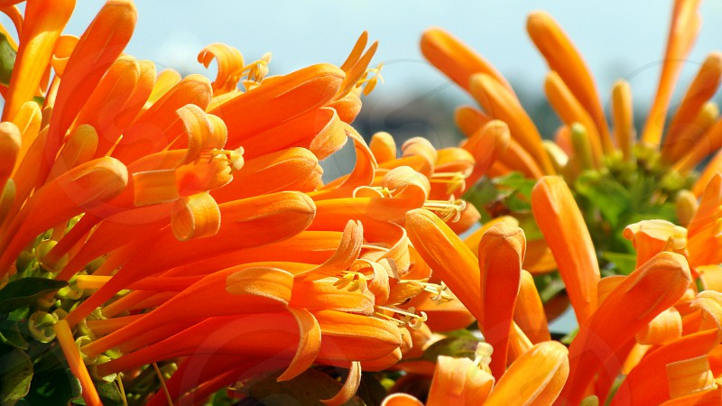 flowers nature photo
