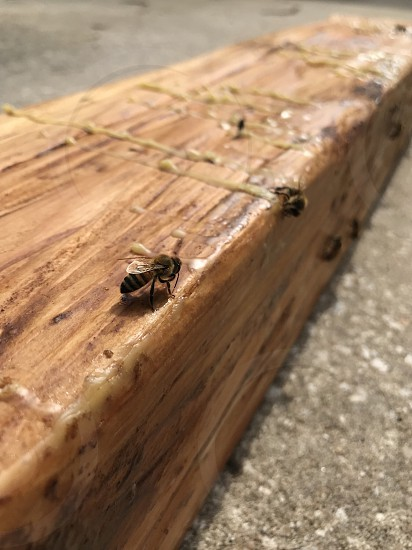 Honey warm bee bees wax woodworking beeswax  photo