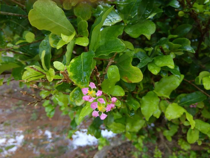 nature flower Amazon photo