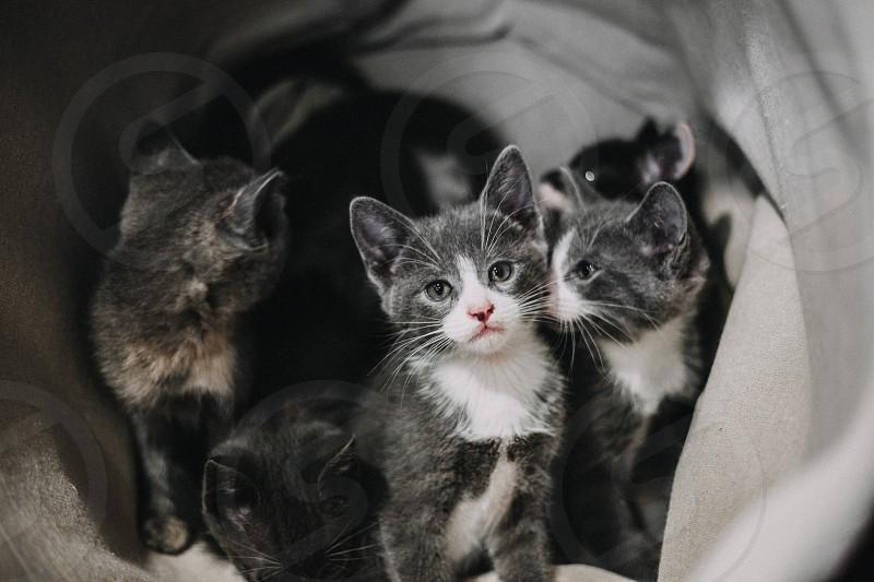 playful kittens.  photo