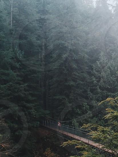 Drift creek falls Oregon bridge photo