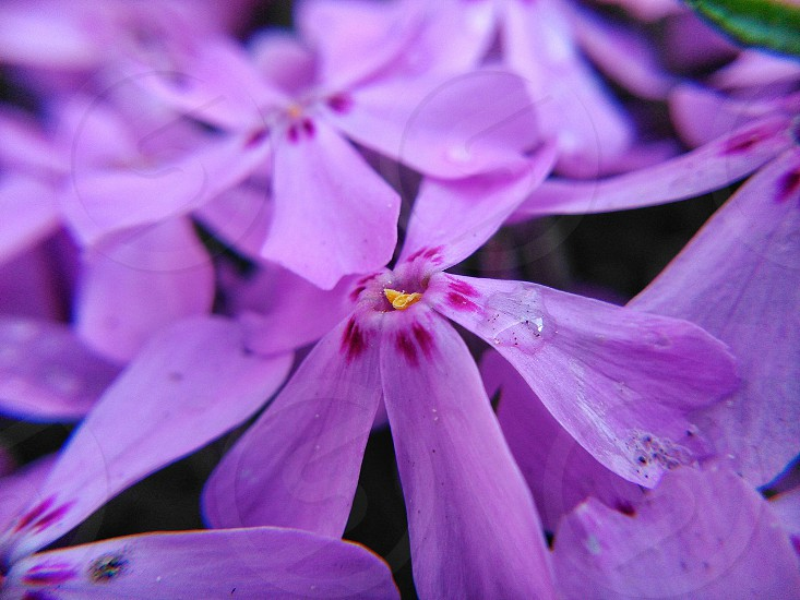 flower spring wiosna nature violet photo