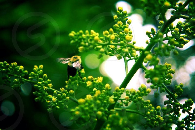 Carpenter bee. Bee nature outdoors photography artistic  photo