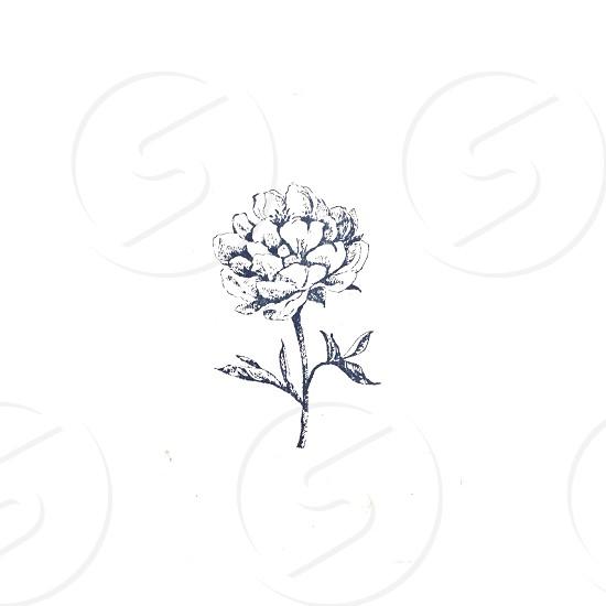 gray flower sketch photo
