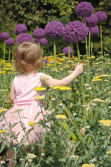 Girl in the flower patch photo