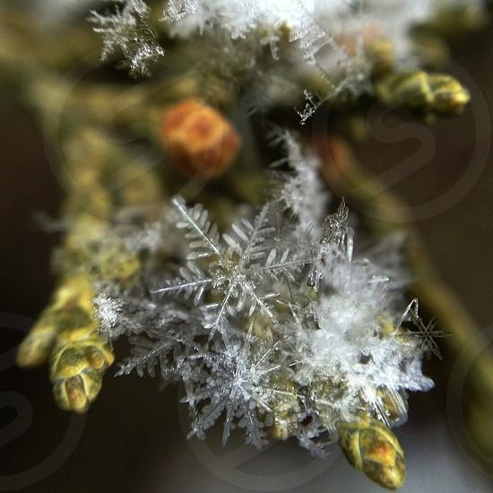 white snowflake photo