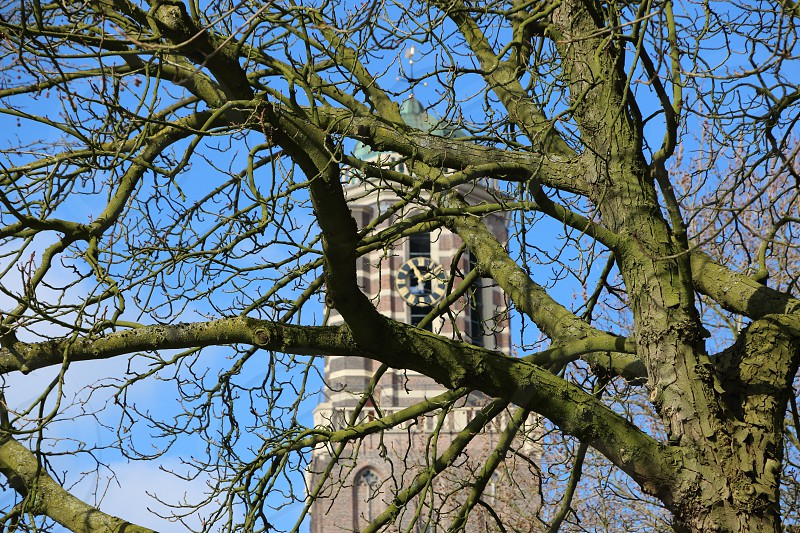 Clock face seen through leafless braches of a tree with clear blue sky. photo