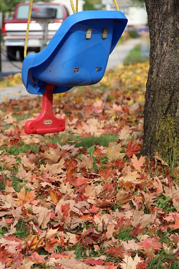 blue and red plastic swing on tree photo