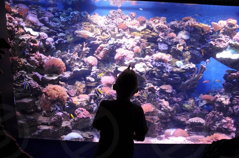 child standing at aquarium glass photo