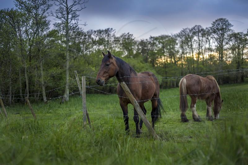 2 horse standing photo